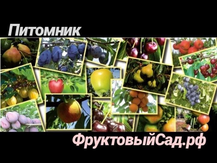 логотип компании Питомник Фруктовый сад