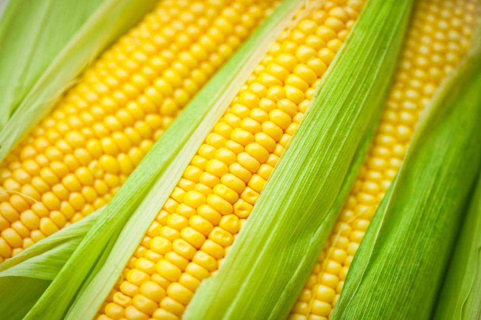 логотип компании Продаем семена кукурузы в краснодаре