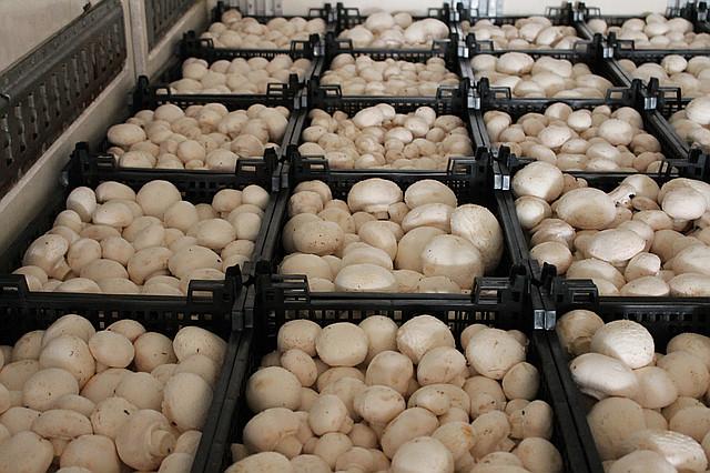 логотип компании Продаем грибы оптом в Краснодаре. грибы оптом Краснодарский край